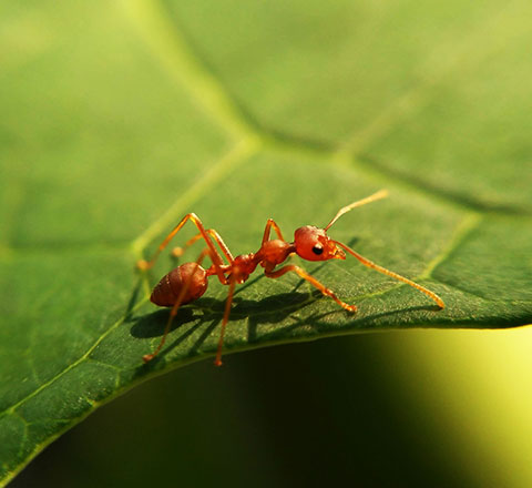 La cité des insectes Micropolis est à 55 km du camping familial l'Ecrin vert en Aveyron