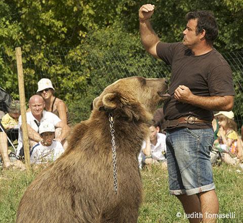 Partez à la découverte du parc animalier du Ségala-Pradinas, situé à quelques kilomètres du camping l'Ecrin vert en Aveyron